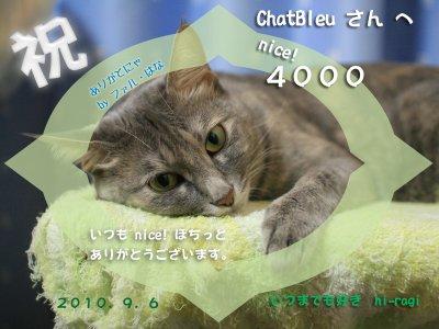 4000nice!thanks_ChatBleusan_s.jpg